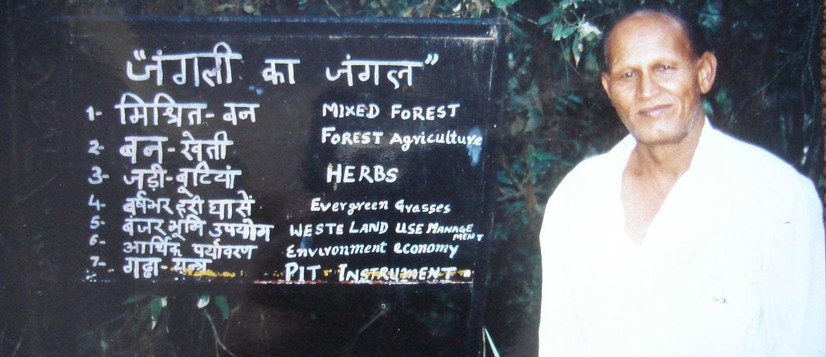 एक मिसाल है जंगली का जंगल