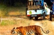 कॉर्बेट के बाघों की मौत की सीबीआई जांच