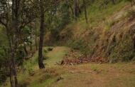जब हल्द्वानी के जंगलों में कत्था बनाने की भट्टियां लगती थी