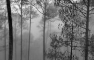 मानसून में कोहरा और पहाड़ - फोटो निबंध