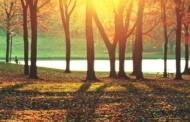 सूरज की मिस्ड काल – 5
