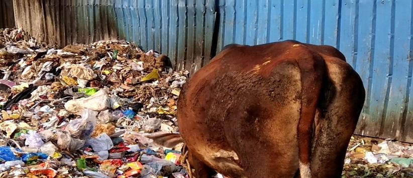 उत्तराखण्ड विधानसभा ने दिये गाय के निबंध हेतु नये बिंदु