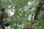 जामुन के पेड़ वाला भूत बनना है मुझे