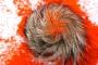 फोर्ब्स सूची में आने के लिए सियार सिंगी की तलाश