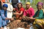गंदरायण: अंतर्राष्ट्रीय ठसक वाला पहाड़ी मसाला