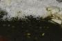 भट की चुड़कानी: पहाड़ियों का पसंदीदा व्यंजन