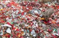बहुत जरूरी है प्लास्टिक के विकल्प की खोज करना