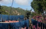 उत्तराखण्ड के विकास का नाम जपने वालों ने एक बार अवनि का काम देखना चाहिए