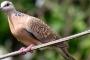 डेन्यूब किनारे हिमालय का पक्षी : बटरोही की कहानी