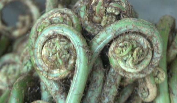 लिंगुड़ा: बरसात के मौसम की स्वादिष्ट पहाड़ी सब्जी