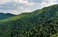 उत्तराखंड के प्रमुख वन आंदोलन