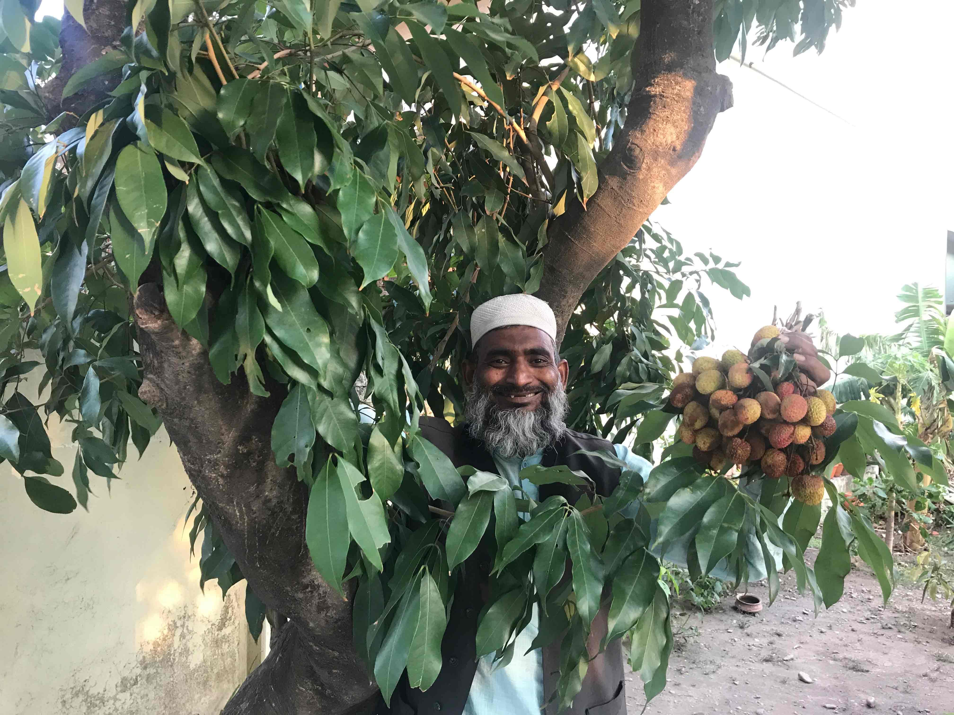 Lichi Memoirs from Uttarakhand