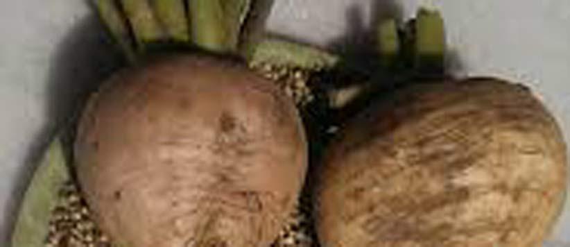 Uttarakhandi Food Moola Thechuva