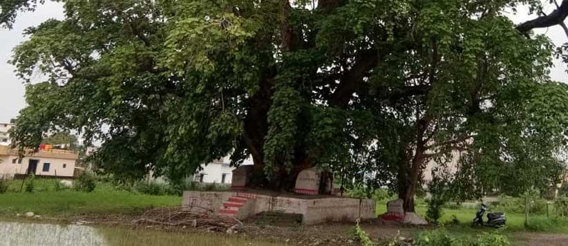 बरसात की पहली लौकी लोक परम्परानुसार भूमिया देवता को अर्पित