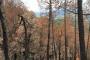 पहाड़ के जंगलों से आग के निशान नहीं मिटा सकेगी बारिश