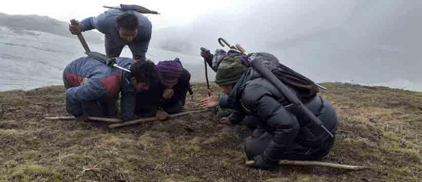 ऊंची पहाड़ियों से इस तरह लाया जाता है यारसा गम्बू
