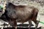 वीएल स्याही लौह हल: हिमालयी पर्यावरण संरक्षण की दिशा में ठोस पहल