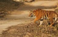 उत्तराखण्ड के उजाड़ घरों में बाघों का आशियाना और बेची जा रही बेटियां