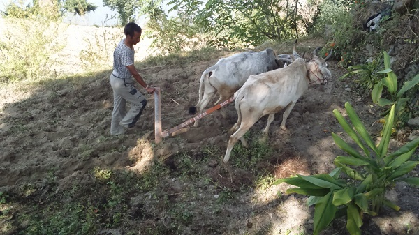 V L Syahi iron plow