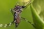 क्या आप जानते हैं डेंगू कितने प्रकार का होता है