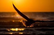 पितृपक्ष: वीरेन डंगवाल की कविता