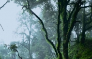 घने कोहरे के बीच – गीता गैरोला की कहानी स्मिता कर्नाटक की आवाज में