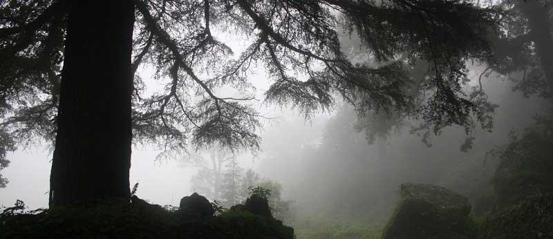 कुमाऊँ के बियावान जंगलों में रहने वाले कठपतिया का किस्सा