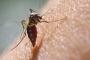 विपक्ष ने षड्यंत्र के तहत डेंगू मच्छर शहर में छोड़ दिए हैं