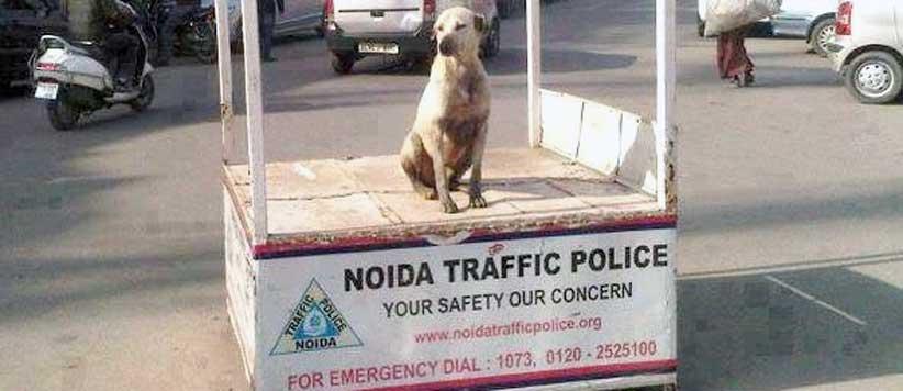 नये ट्रैफिक नियमों के बाद चौराहे पर काबिलियत दिखाने को लालायित हैं पुलिस वाले