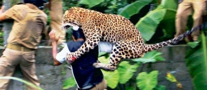 Man-eating leopard in Uttarakhand