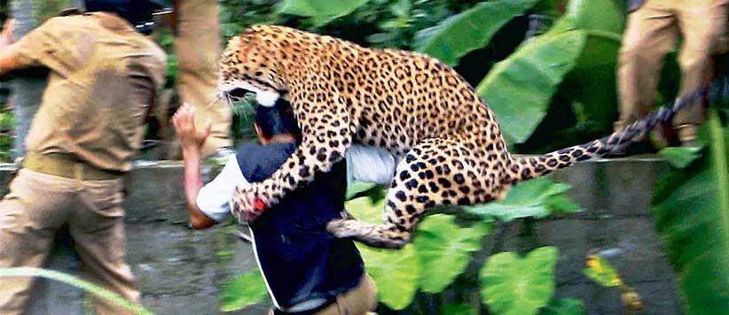 Man-eating leopard in Uttarakhand