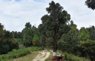 कुमाऊं के सर्वाधिक पूज्य और लोकप्रिय देवताओं में से एक है भोलानाथ