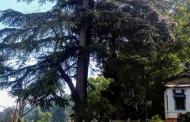 अल्मोड़ा में ब्राईट एंड कॉर्नर का बोर्ड चोरी