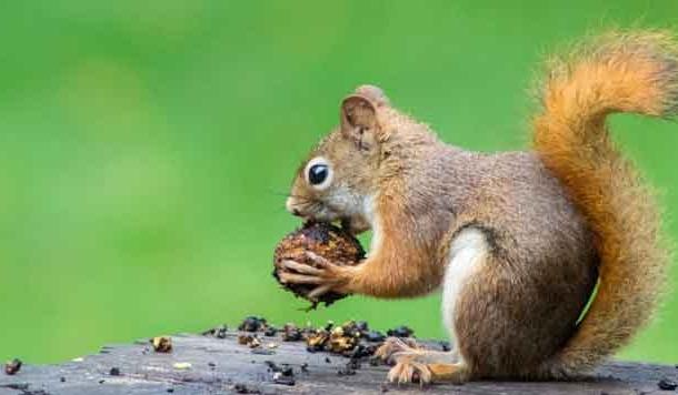 छोटी-छोटी चीजों के स्वाद से बना जीने का ज़ायका