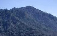 जंगलों में गांव की भागीदारी बनी ही रहनी चाहिए