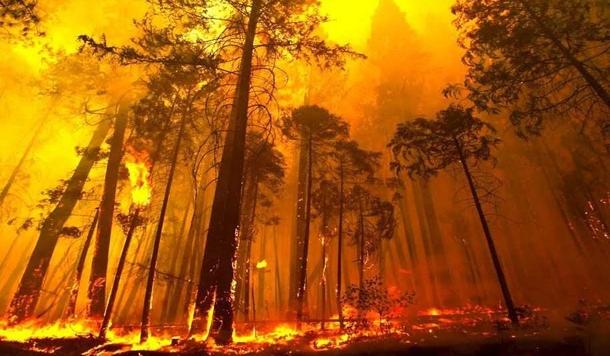 त्यौहार का दिन और जंगल की आग - विद्यासागर नौटियाल का एक संस्मरण