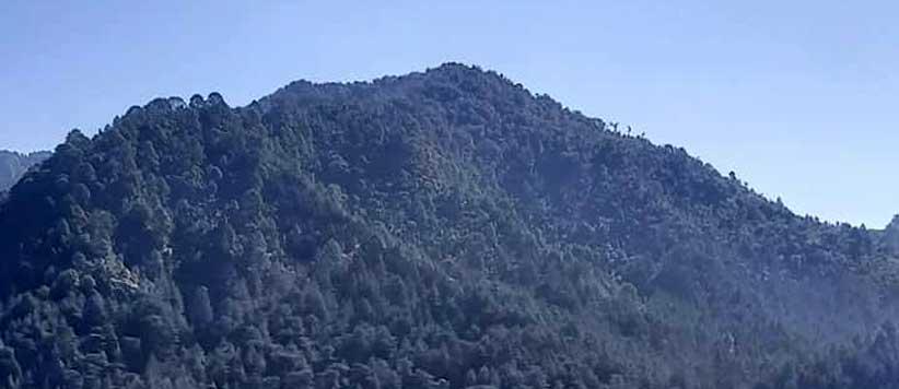 Villagers Deserve Participation in Forest Management