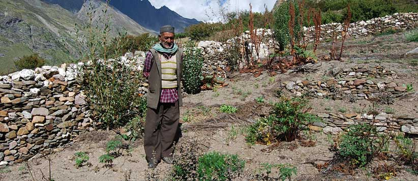 Gandraini a Valuable Herb from Himalayas