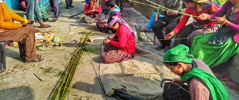 Ringal Multifunctional plant of Uttarakhand
