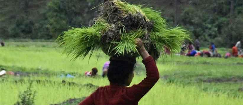 स्माल इज ब्यूटी फुल : जैविक उत्पादन की ओर उत्तराखंड