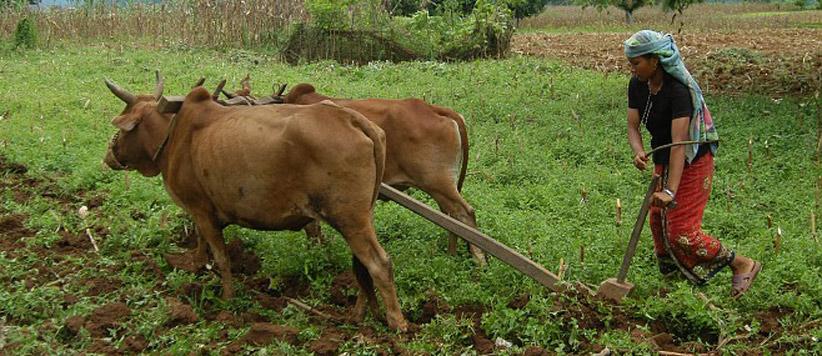 ग्रेजुएट ब्वारियों की चाहत बनाम पहाड़ से पलायन : उत्तराखण्ड स्थापना सप्ताह पर विशेष
