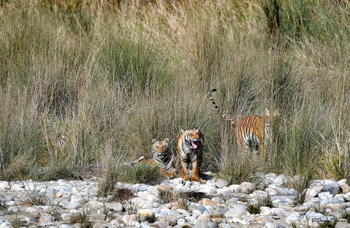 Wildlife Photographer Deep Rajwar