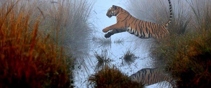 उत्तराखण्ड के बेहतरीन वाइल्डलाइफ फोटोग्राफर हैं दीप रजवार