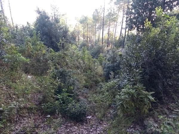 Uttarakhand Forests