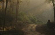 स्याहीदेवी शीतलाखेत के वन क्षेत्र में एएनआर से विकसित जंगल का माडल