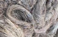 बाबिल घास : पहाड़ की बहुउपयोगी घास