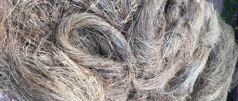 Babil Grass Uttarakhand