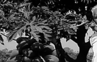 देशभर के लोगों ने कालाढुंगी के हरिकृष्ण चड्ढा से पपीते की खेती के नुस्खे सीखे हैं