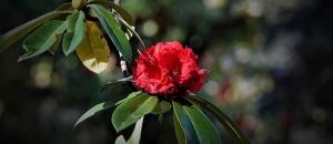 Spring in Uttarakhand