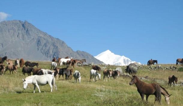 मर्तोली के बुग्यालों में चौमास में चरने वाले घोड़े और खच्चर गुलामी भूल जाते हैं
